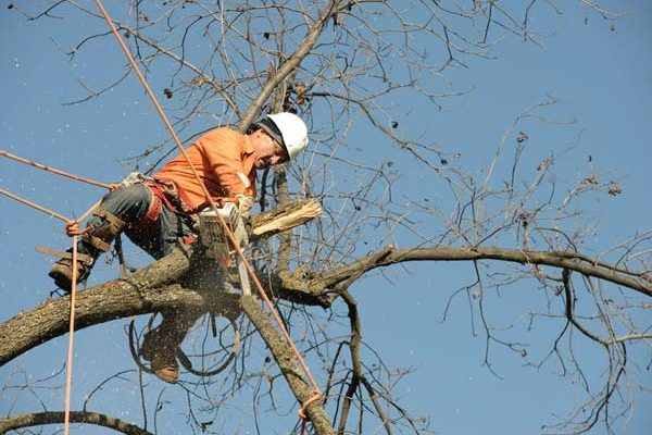 Tree-Removal-6